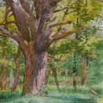 A Very Old Oak, 2012