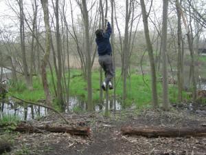 Climbing A Sapling